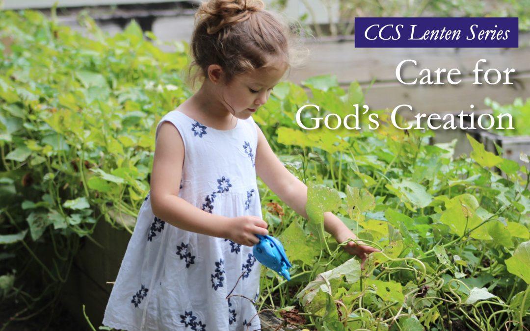 Catholic Social Teaching: Care for God's Creation